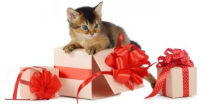 diy-holiday-gifts-for-pets